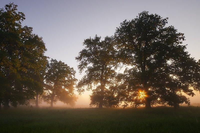 Утро в рощеphoto preview