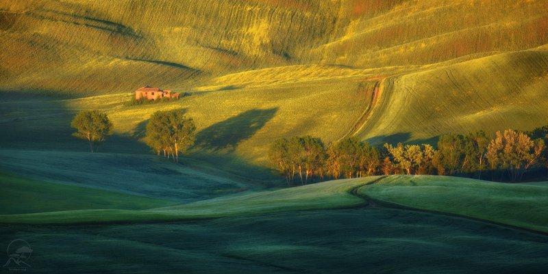пейзаж, природа, поле, тоскана Майское утро в Тоскане фото превью