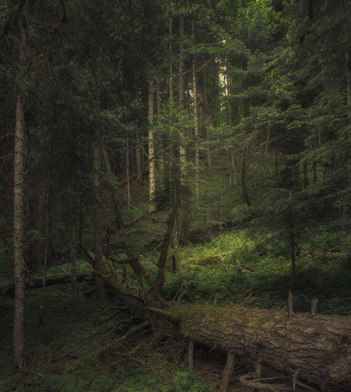 теберда, кчр, лес, природа, лето, деревья Тебердинский заповедникphoto preview