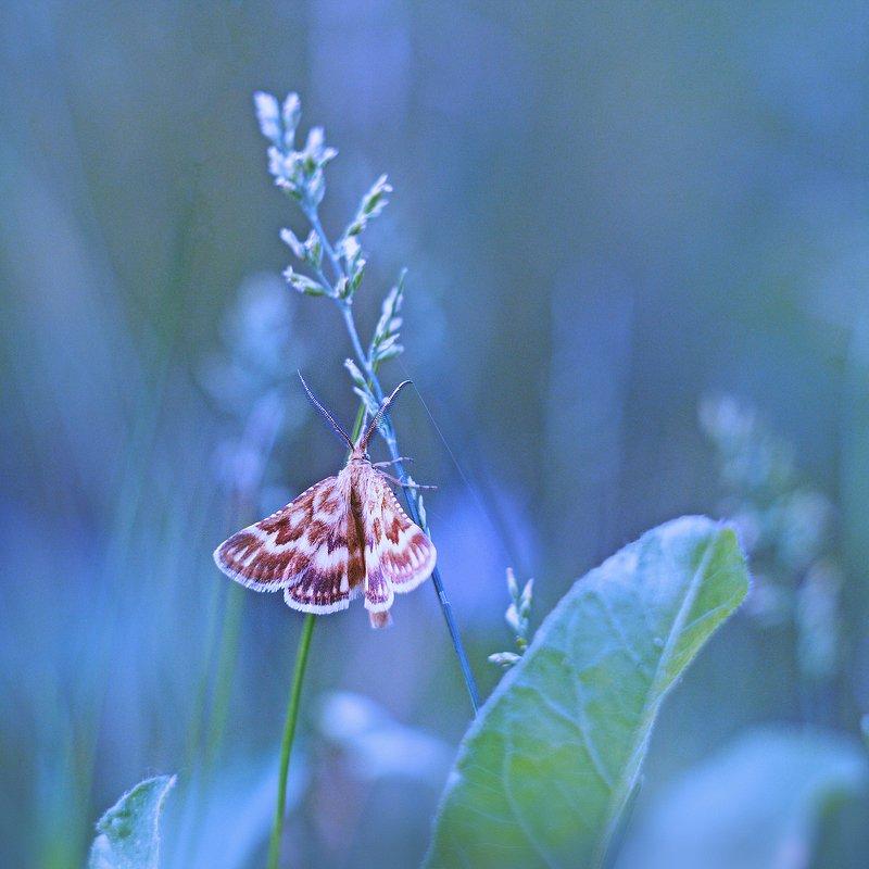 moment, момент, beautiful, красивый, helios-44m, manual lens, мануальная оптика, nature, природа, wildlife, живая, spikelets, колоски, meadow, луг, insect, насекомое, moth, мотылек, summer, лето, Дышит прохладой летнее утро...photo preview