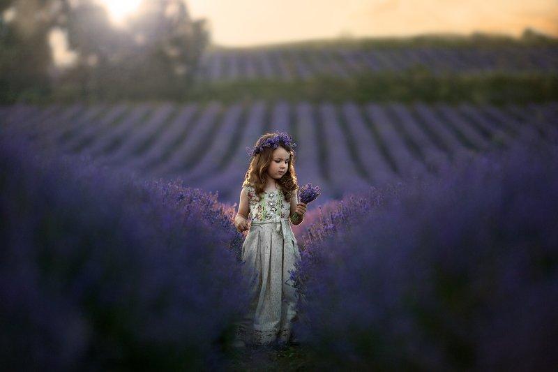 детская фотография, портрет, природа, лаванда, lavender Лавандаphoto preview