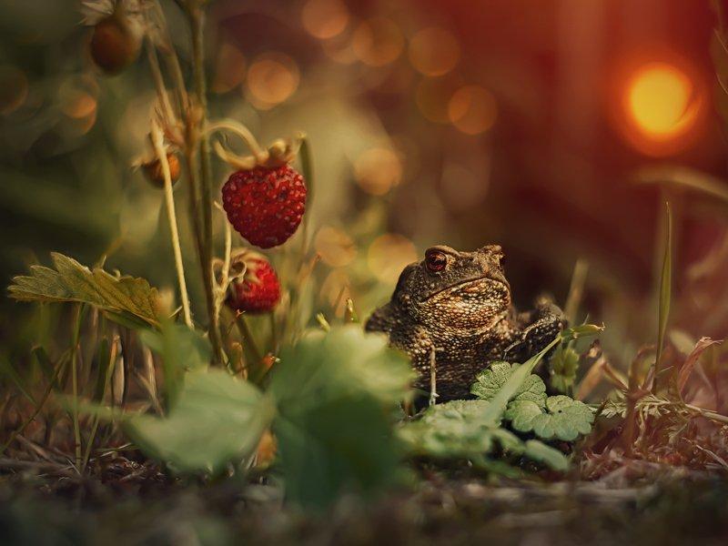гелиос44 жаба макро боке закат Серьезная дамаphoto preview