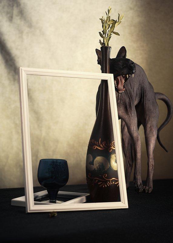 кошка, сфинкс, цвет, портрет, кошка-модель, животные позируют Претензияphoto preview