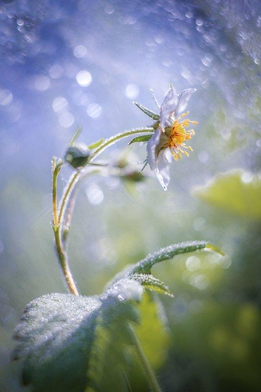 Весна продолжается) фото превью