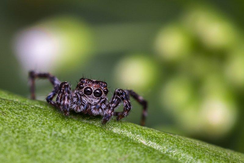 паук, пушистый, глаза, лапки, милота Эти глаза напротив...photo preview