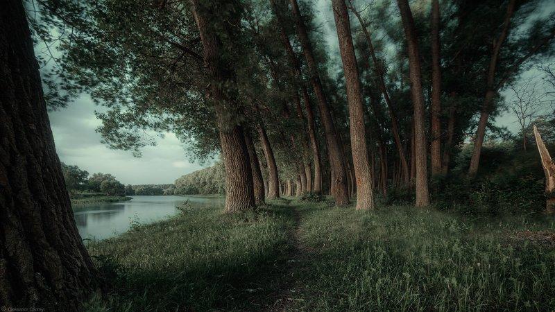 берег, ветер, гармония, деревья,жизнь, зеленый, природа, река, свобода, тетерев, трава, тропинка, украина, фотограф, коростышев, бытие, чорный \