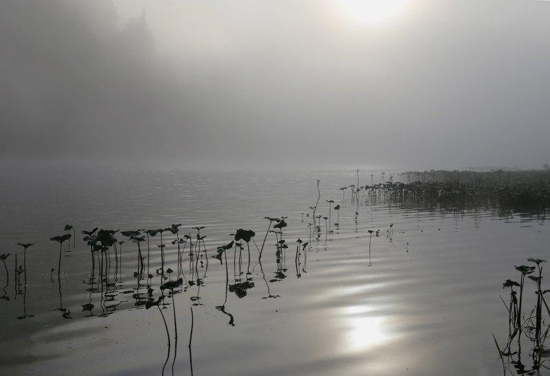 горная шория, сибирь, шерегеш, горы, мрассу, туман Рассвело - и туман отступил понемногу...photo preview