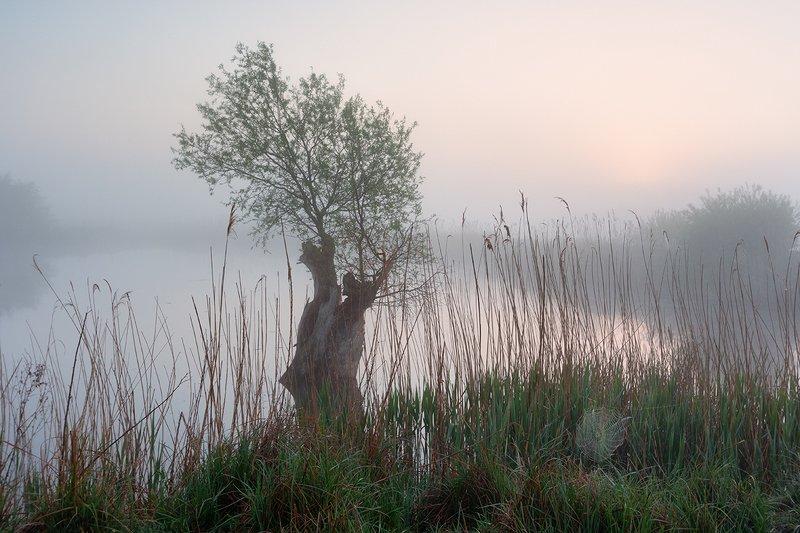 May atmosphere фото превью