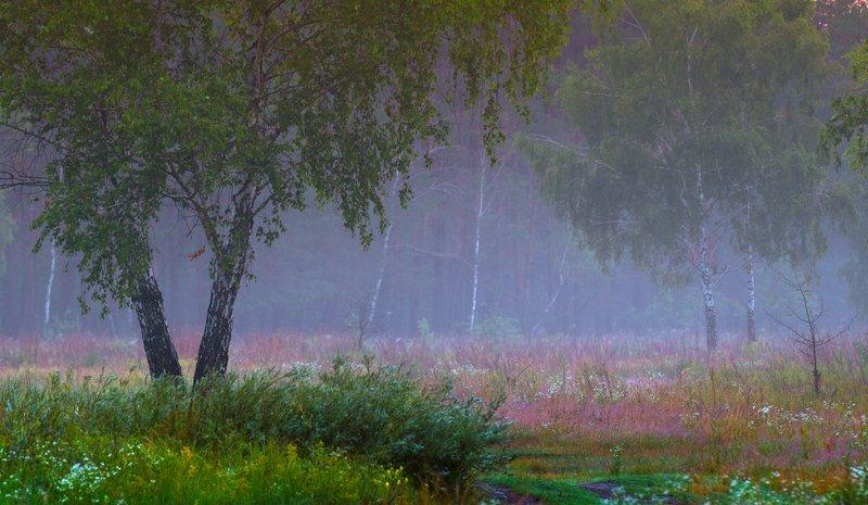 луг, рассвет, лето, сумерки, туман В сумерках сиреневых туманныхphoto preview