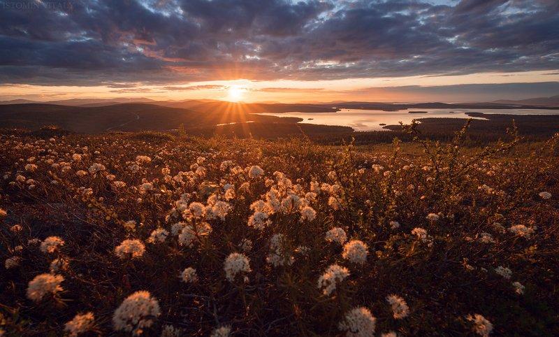 пейзаж,россия,кольский,север,небо,закат Белые ночиphoto preview