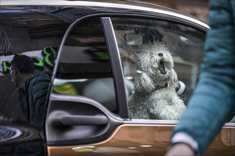 dog, собака ***photo preview
