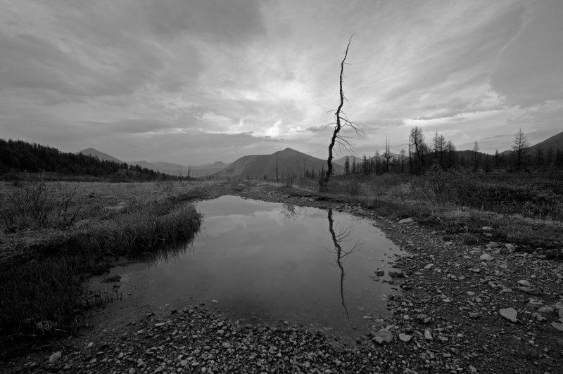 горы, дерево, дорога, лужа Где-то в Саянахphoto preview