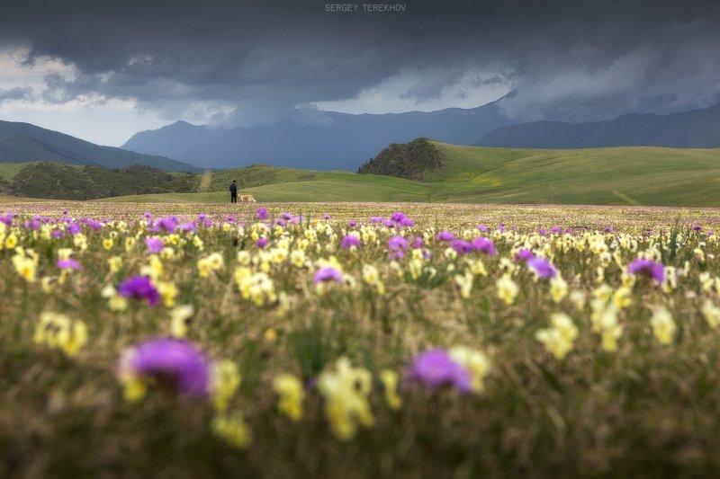 дон жайляу, заилийский алатау, казахстан, горы казахстана, сергей терехов, тянь-шань фото-трип, Заливные луга плато Дон Жайляуphoto preview