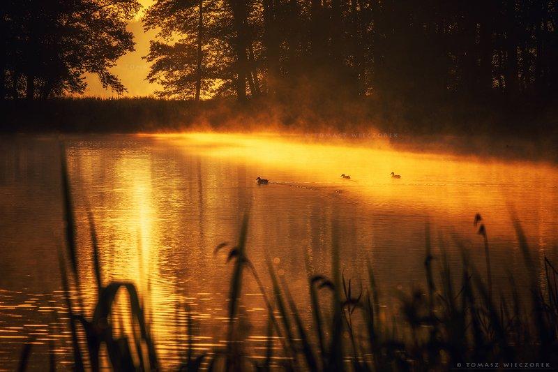 forest, poland, polish, landscape, sunrise, sunset, mood, musing, beautiful, amazing, awesome, adventure, explore, travel, light, birds, golden, lake Golden hour фото превью