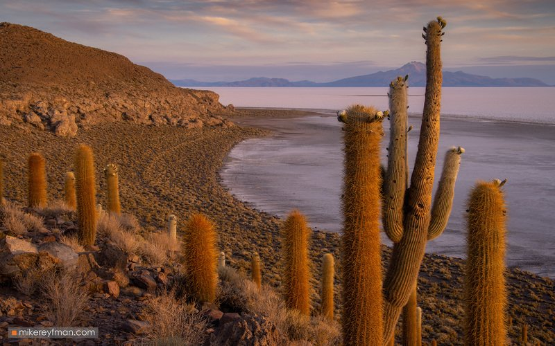 uyuni, bolivia, andes, andesmountains, cactus , southamerica, indigenous, desert Колючий рассветphoto preview