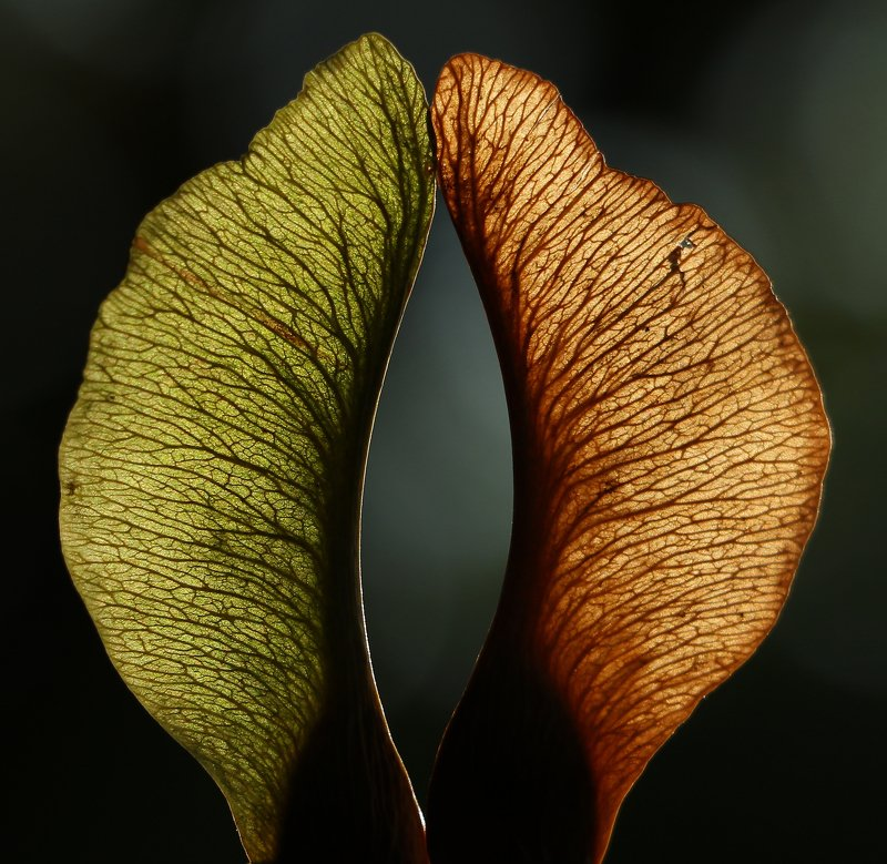 природа, макро, арт, фотографии, Шаварёв, Влюблённая пара.photo preview