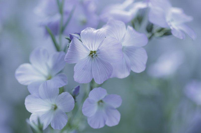 kwiaty,polne,lato,bokeh,martwa natura, flowers, nature, still live Lenphoto preview