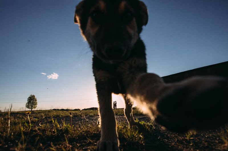 ильярихтер, рихтер, lovestory, canon6d, собака, семья Случайностьphoto preview