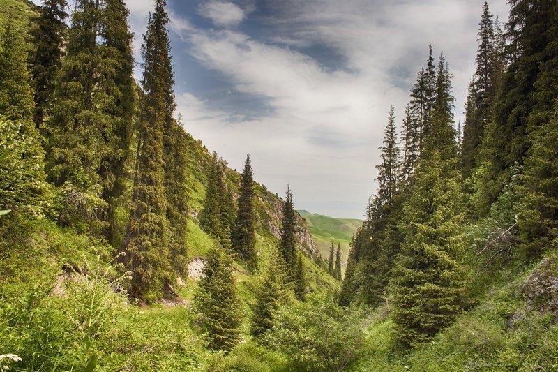 кыргызстан, горы В лесу родилась елочка...photo preview