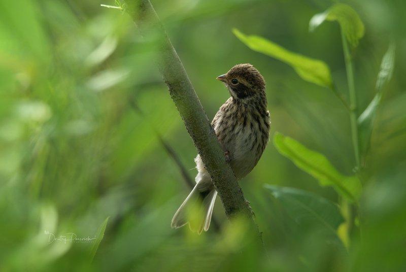 природа, лес, животные, птицы Ожидание мамы фото превью