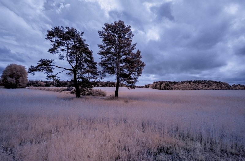 infrared,ик-фото,инфракрасное фото, инфракрасная фотография, пейзаж, лето Начиналось лето пасмурным днем.photo preview