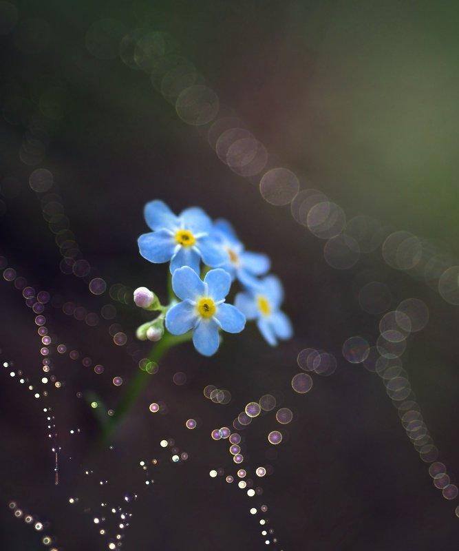 бокешки, роса, паутинка, цветы, лес, волшебство, природа photo preview