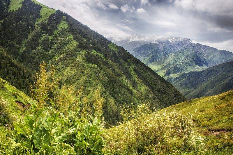 кыргызстан, горы Летнее настроениеphoto preview