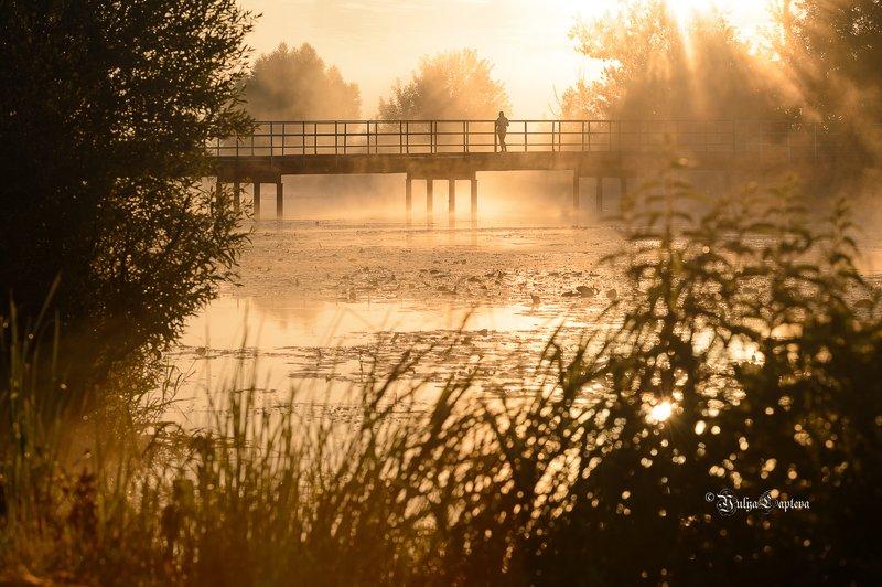 пейзаж,природа,рассвет,утро,красота,россия,туман,июнь \