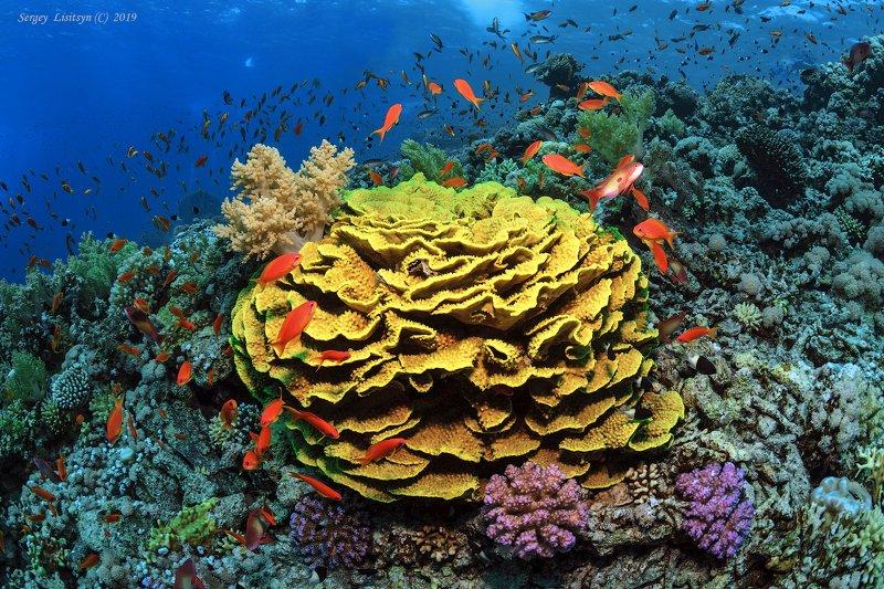 Коралловые рифы Красного моря.photo preview