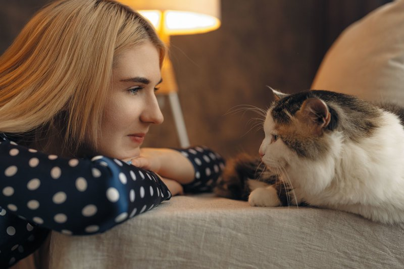гламур, портрет, модель, арт, art, model, popular,питомец, кот, кошка photo preview