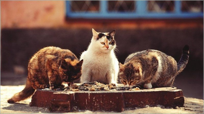 День кошек...Будни..photo preview