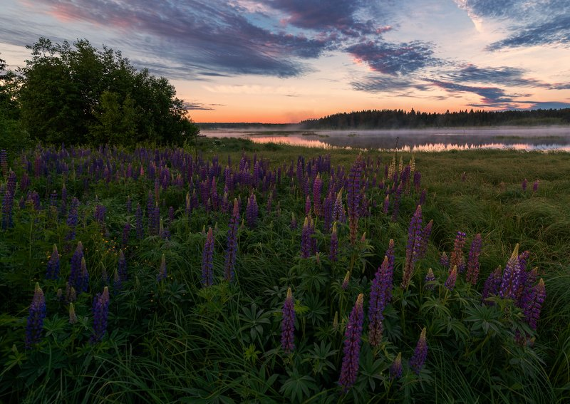 утро,рассвет,природа,Вятка, Россия Яркие краски утраphoto preview
