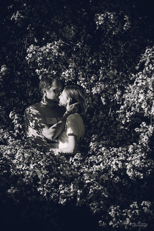 поцелуй, пара, love, kiss, sunlight, blossom Поцелуйphoto preview