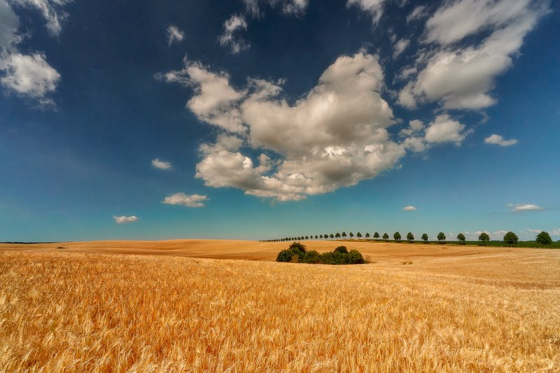 color, country,  day, field, forest, gold,  landscape,  light, light sun,  morning, nature, outdoors,  scene, season, sky rural Alleyphoto preview