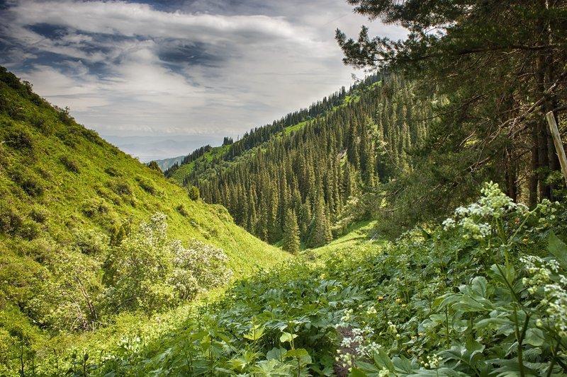 кыргызстан, горы Тепло июняphoto preview