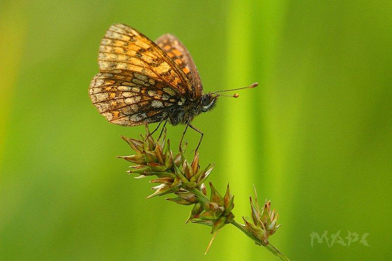 макро бабочка лето Лето в разгареphoto preview