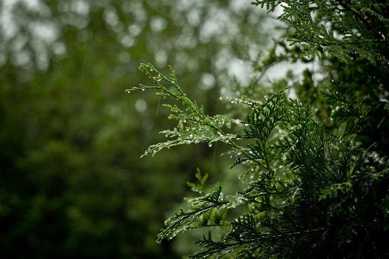россия виноградово природа красиво дождь зеленое утро начинается с дождя*photo preview