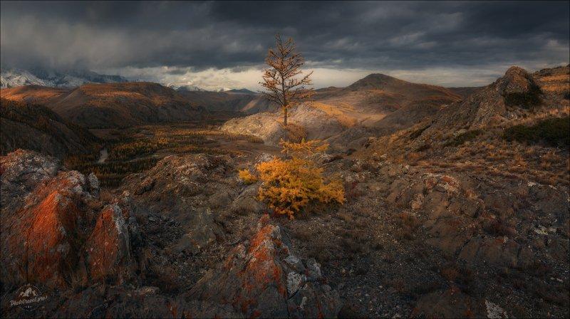 алтай, курай, курайская степь, северо-чуйский хребет, курайский хребет, урочище таджилу Одиночество осень ..photo preview
