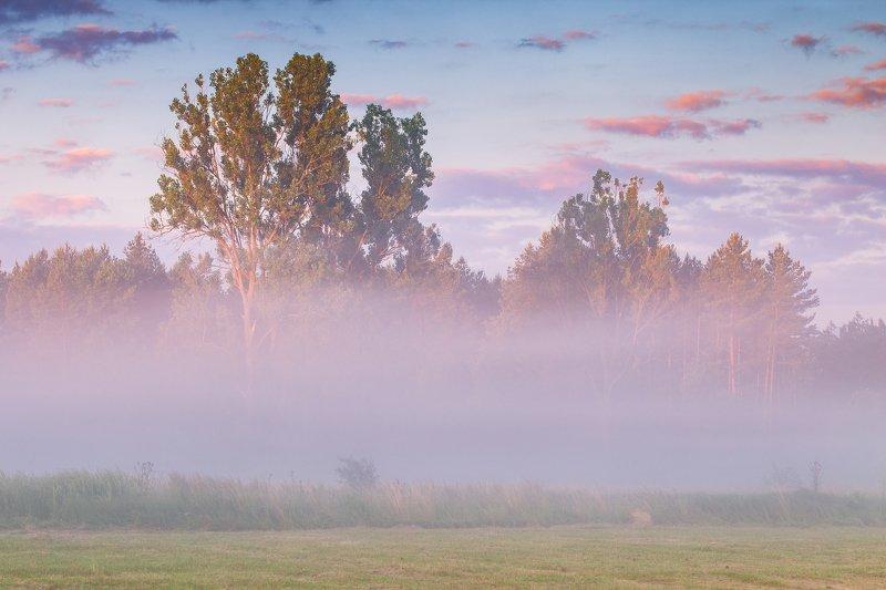 morning mists,mists,landscape,zawiercie,rydzewski,canon,6d,poland,slask,podlasie, mgły, Morning mistsphoto preview