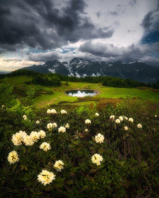 рододендроны, озеро, лето, горы, облака, пейзаж, кавказ Озеро Зеркальноеphoto preview