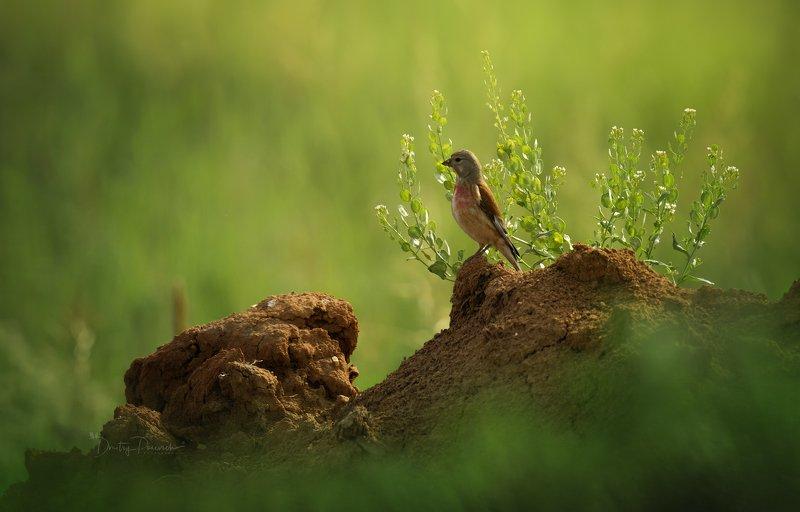 природа, лес, животные, птицы На посту фото превью