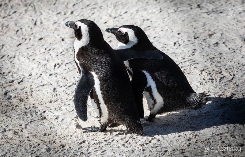 Penguin friendshipphoto preview