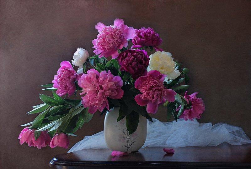 Цветы пионы, драпировка Пионов нежный аромат.photo preview