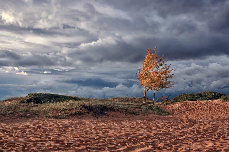пейзаж,осень,дерево,холмы,непогода,ветер,небо,облака Осенний ветер.photo preview