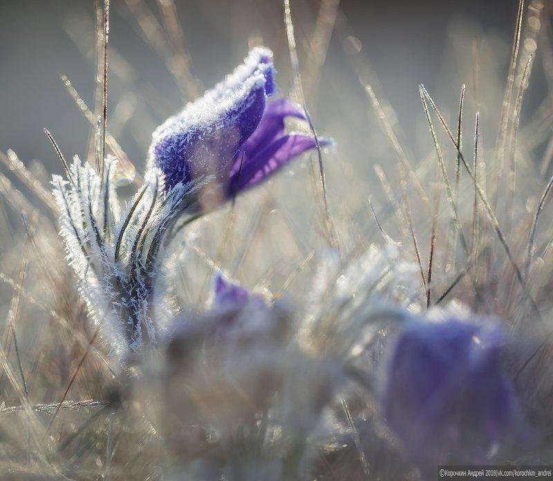 Сонная трава...photo preview