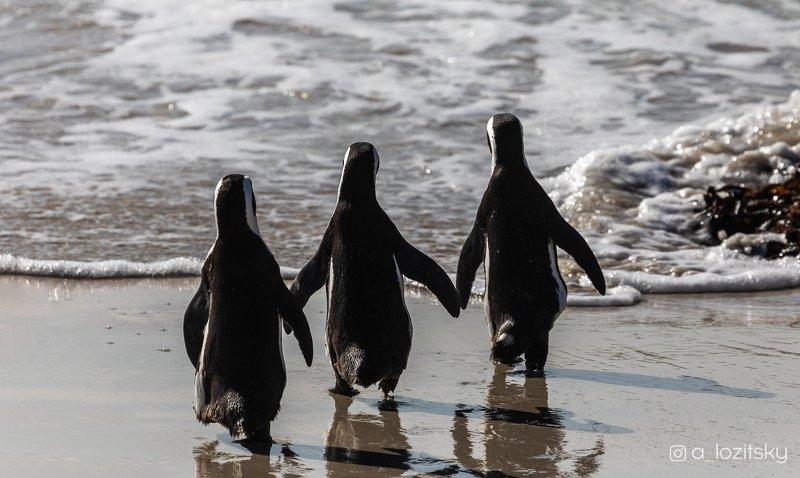 Penguin friendship)photo preview