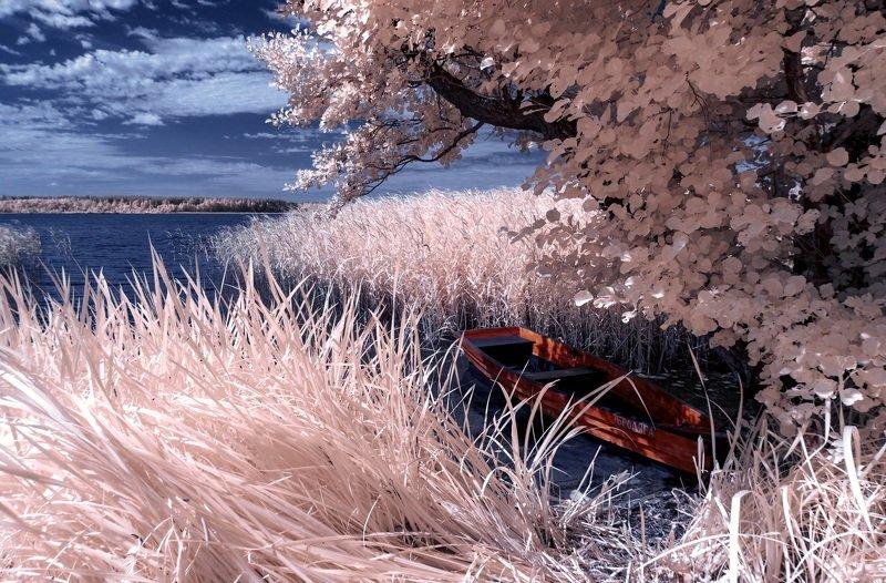 infrared,ик-фото,инфракрасное фото, инфракрасная фотография, пейзаж, лето Бродяга.photo preview