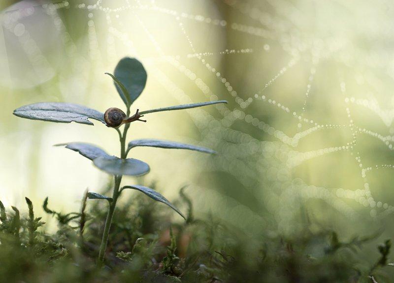 паутинка, улитка, макрокрасота, красота природы, бокешки photo preview