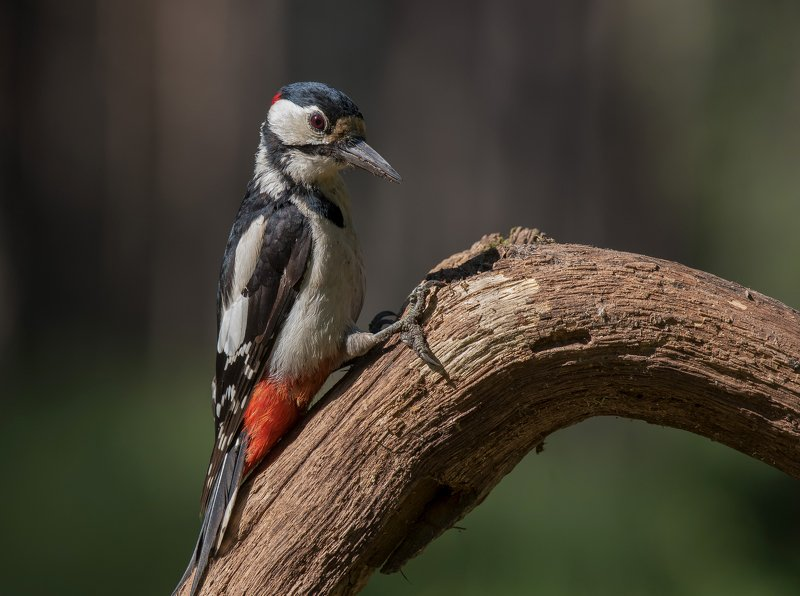 птицы,природа,лето БПДphoto preview