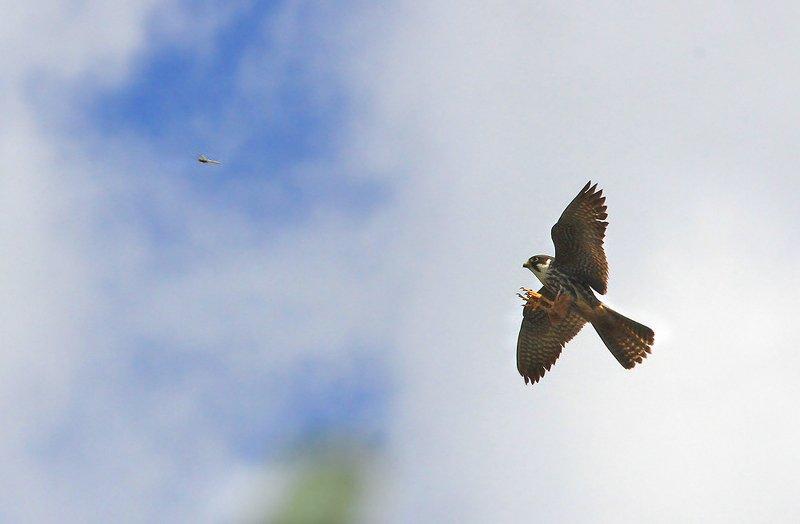 Охота на стрекозуphoto preview